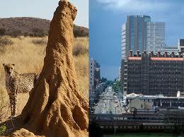 Termite mound design